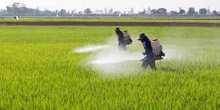 Unicentro participa de discussões sobre efeitos de agrotóxicos na população